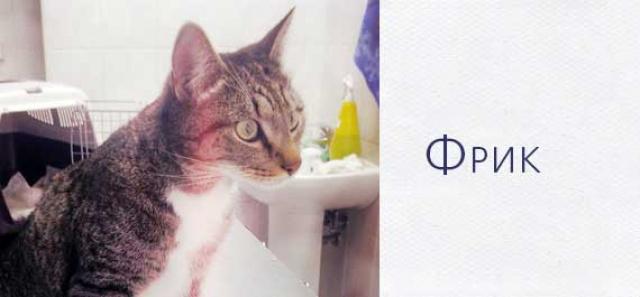Беспородный кот Фрик