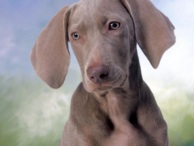 Если собака боится грозы?