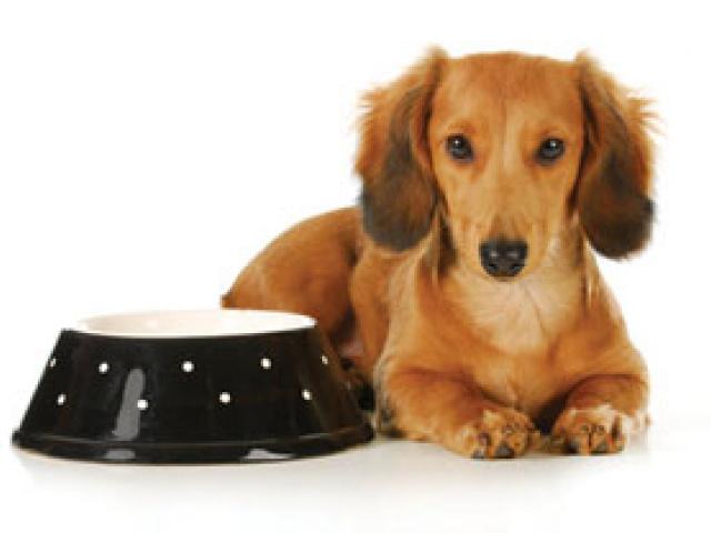 Корма для собак. Сухой или консервы? Какой выбрать