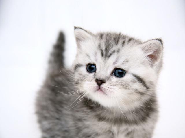 Кормление котят готовыми рационами