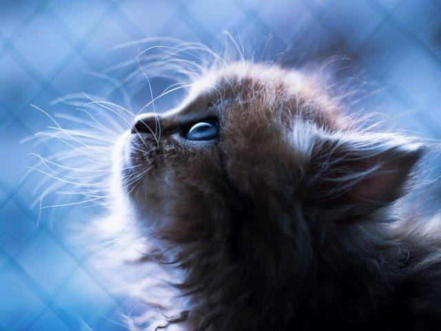 Нос у кошек — индикатор состояния здоровья питомца